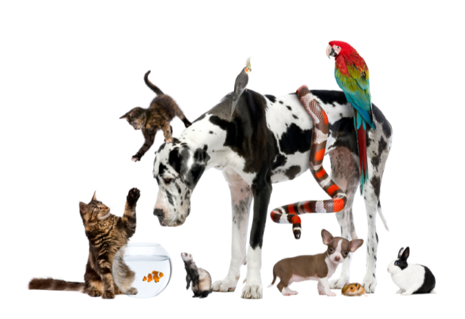 4pm Blessing of the Animals